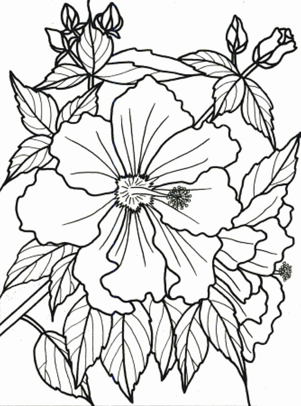 Bobook clipart flower Classy clipart Color Coloring Flower