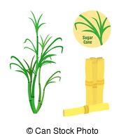 Boose clipart rum Cane sugarcane Rum Vectors sugar
