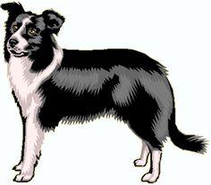 Border Collie clipart  art Border » Dog
