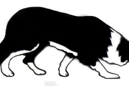 Border Collie clipart black and white Clip Art Outline And Collie