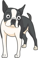 Boston Terrier clipart Smile Boston make  Boston