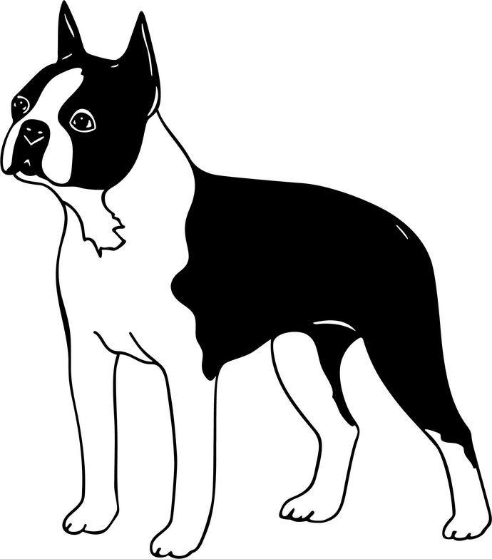 Boston Terrier clipart  Boston Terrier Bull Clipart
