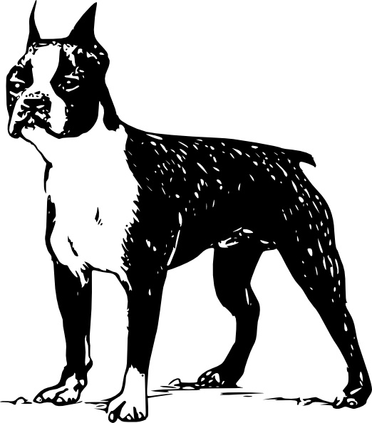 Boston Terrier clipart Office Free in drawing Boston