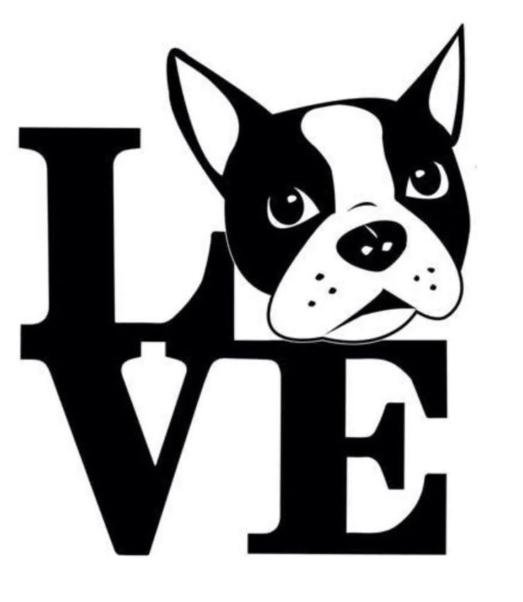 Boston Terrier clipart anime boston Love Terrier 157 Art Boston