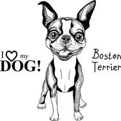 Boston Terrier clipart anime boston Clip Terriers Art Terrier Boston