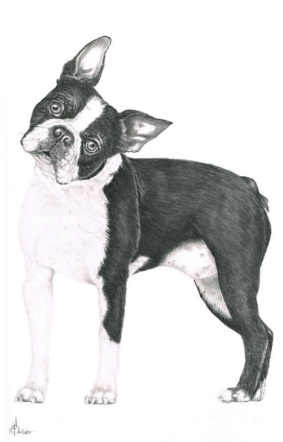 Boston Terrier clipart black and white Terriers images on Terrier Pinterest