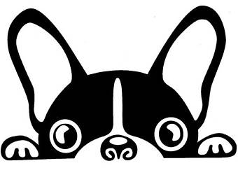 Boston Terrier clipart face Decal decal Boston Terrier terrier