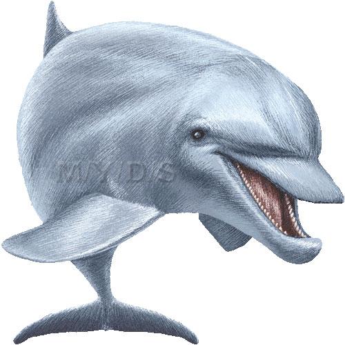 Bottlenose Dolphin clipart Dolphin graphics picture Bottlenose art