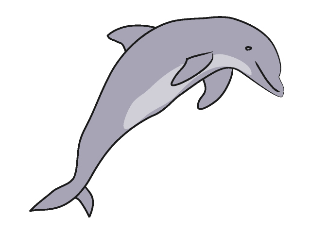 Dolphins clipart Download Dolphin drawings Download #18