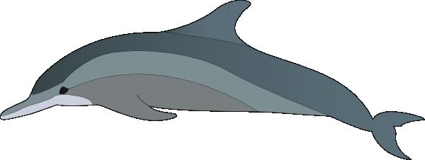 Bottlenose Dolphin clipart At com as:  Art