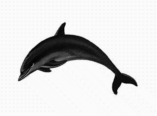 Bottlenose Dolphin clipart animation Dolphin Free 1 Clip Clipart