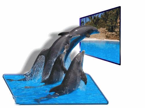 Bottlenose Dolphin clipart blue thing Best images dolphin on Dolphins