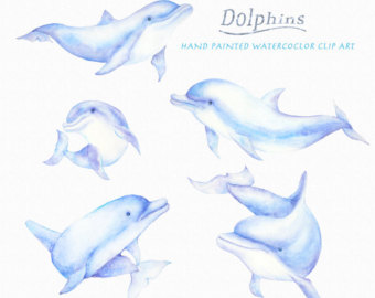 Bottlenose Dolphin clipart blue thing Dolphins Dolphin art Clip Animal