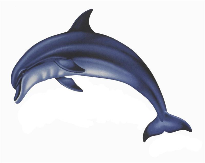 Bottlenose Dolphin clipart cartoon BBCpersian7 Images Dolphin Rainbow #354037