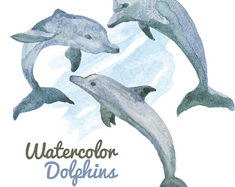 Bottlenose Dolphin clipart creature Clipart download clipart Dolphins Dolphin