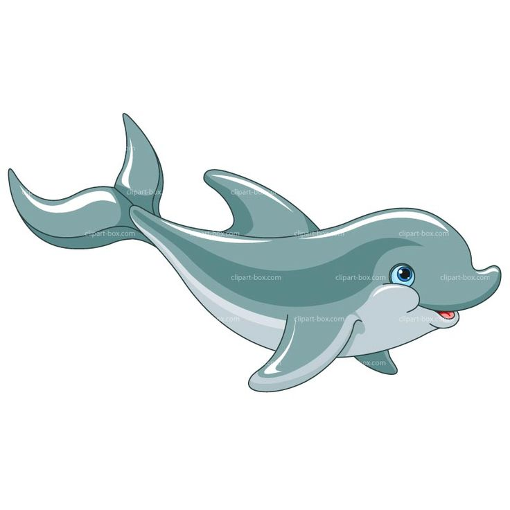 Bottlenose Dolphin clipart flipper DOLPHIN Royalty on images Dibujos