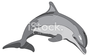 Bottlenose Dolphin clipart nosed Clipart clipartsgram Bottlenose Clipart Dolphin