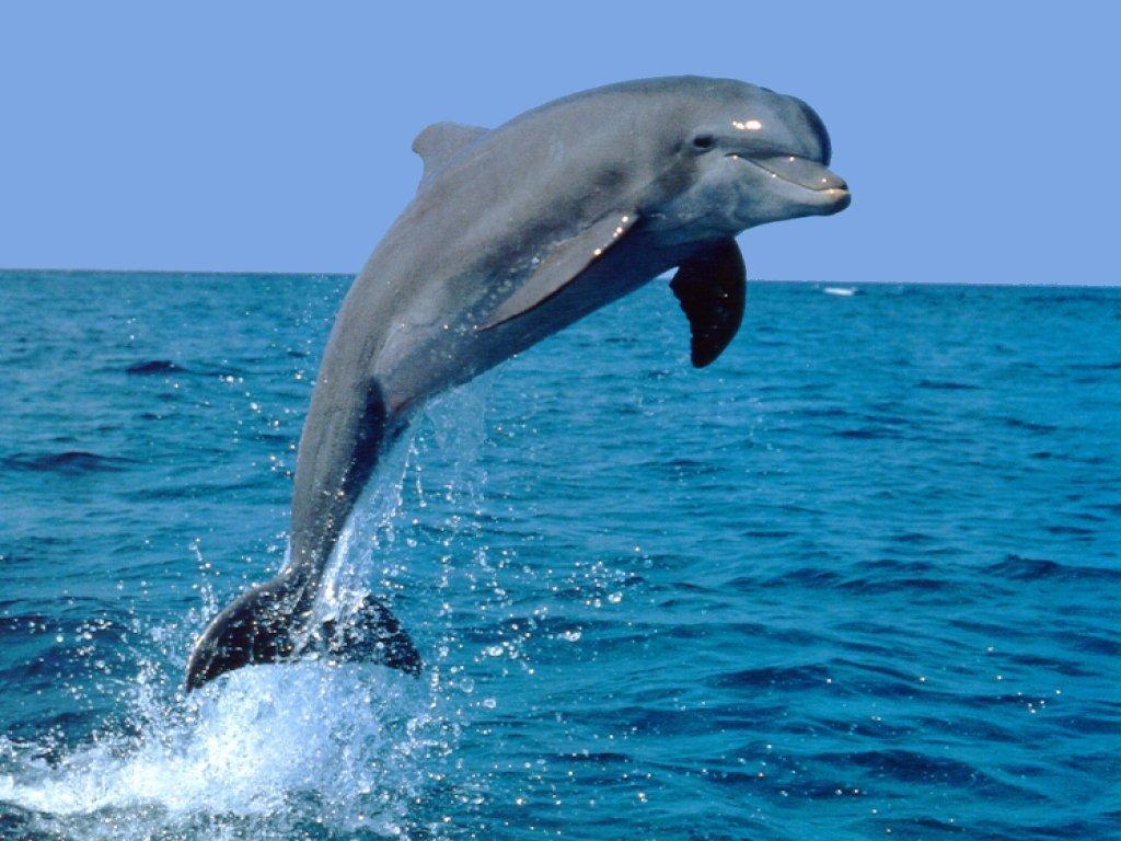 Bottlenose Dolphin clipart ocean animal Which Playbuzz Ocean You? Animal