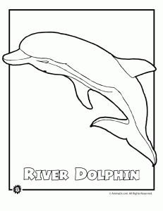 Bottlenose Dolphin clipart ocean animal #14