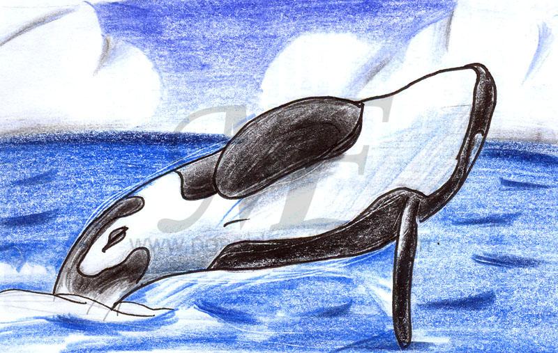 Bottlenose Dolphin clipart poseidon Breachinga VCL jpg Poseidon vcl