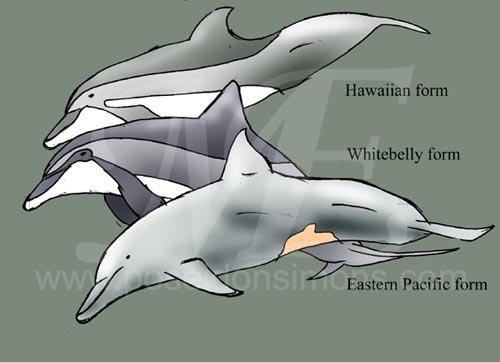 Bottlenose Dolphin clipart poseidon Lsspinners VCL jpg Poseidon vcl