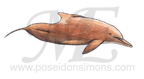 Bottlenose Dolphin clipart poseidon Jpg Poseidon VCL Simons ahumpback