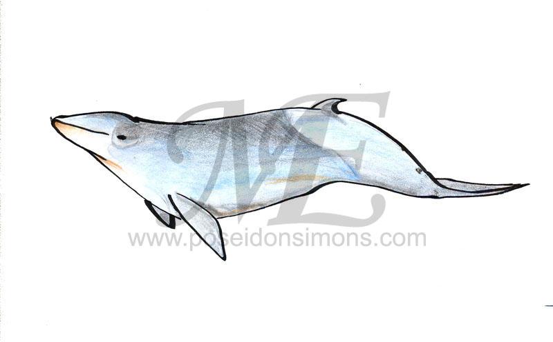 Bottlenose Dolphin clipart poseidon Trues_beaked_whale VCL jpg Poseidon vcl