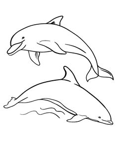 Bottlenose Dolphin clipart traceable Com coloring PDF Free Print