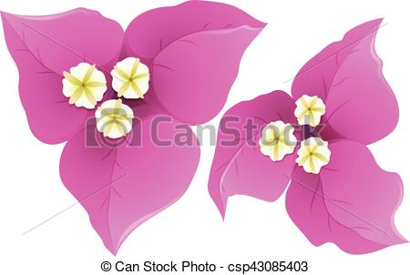 Bouganvillea clipart Of pink pink  Bougainvillea