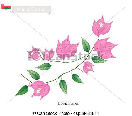 Bouganvillea clipart Flower Flowers Pink Vector of