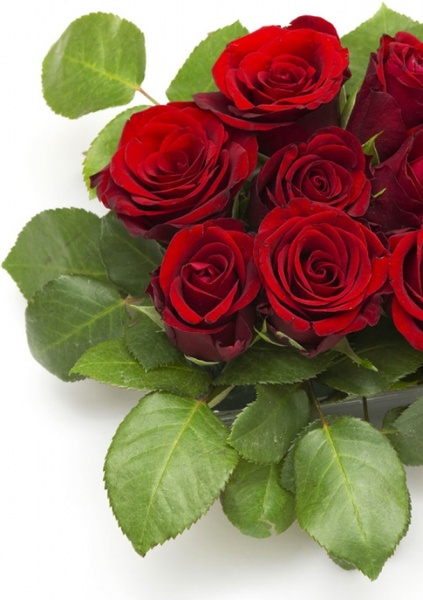 Bouquet clipart beautiful flower Stock free  05 354