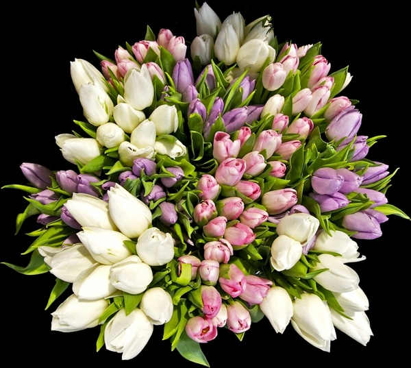 Bouquet clipart beautiful flower (11 download tulips Free free