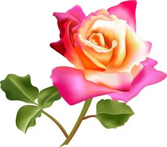 Beautiful clipart beautiful flower Collection art photo art rose