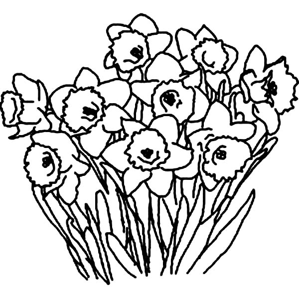 Drawn daffodil flower bunch #15