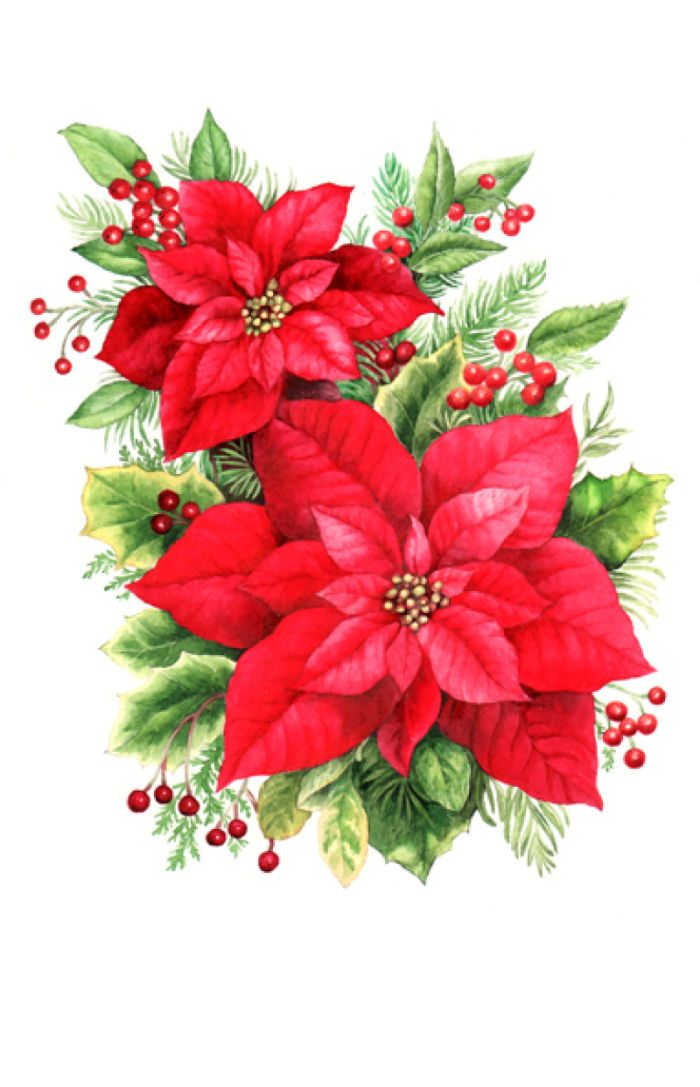 Poinsettia clipart beautiful christmas Poinsettias Flowers and more Flowers