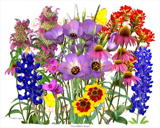 Wildflower clipart flower bucket Print Wildflower H pictures artistic