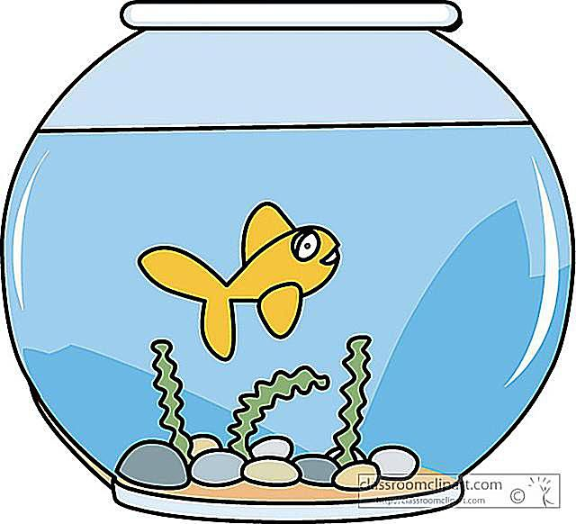Bowl clipart fish swimming Fish A a of goldfish