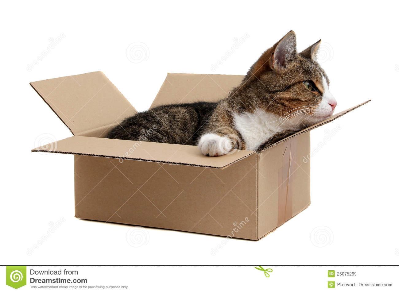 Box clipart cat In a Cat clipart box
