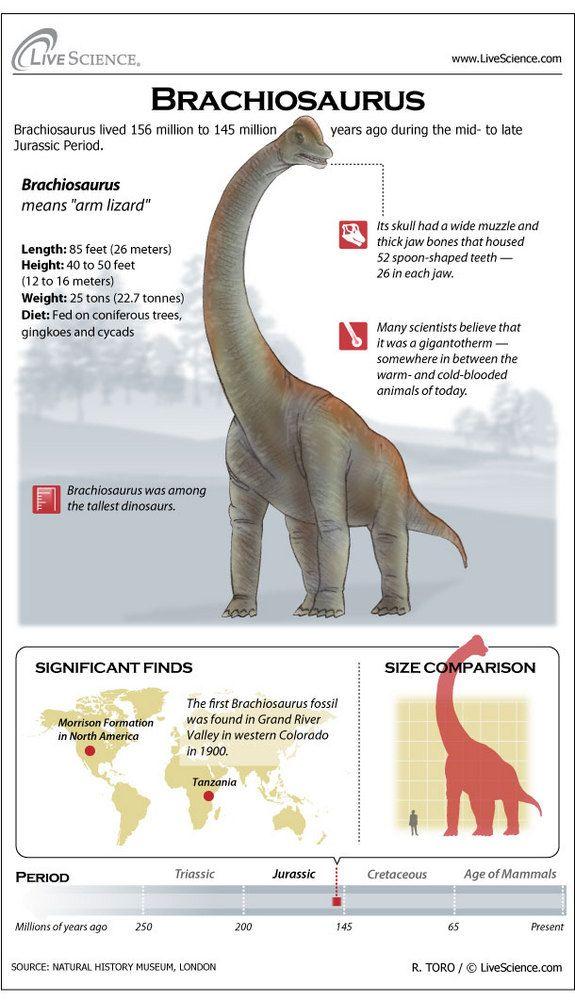 Brachiosaurus clipart dinosaur king King raul Brachiosaurus Gallery aarde