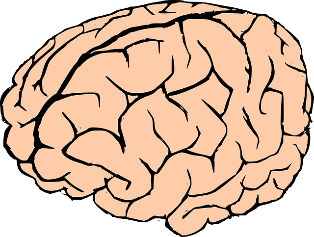 Brains clipart turn Domain to Art Clip Clip