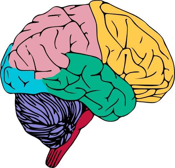 Brains clipart turn Pictures Free use Brain Clip