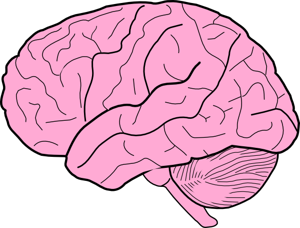 Brains clipart turn Brain art free art royalty