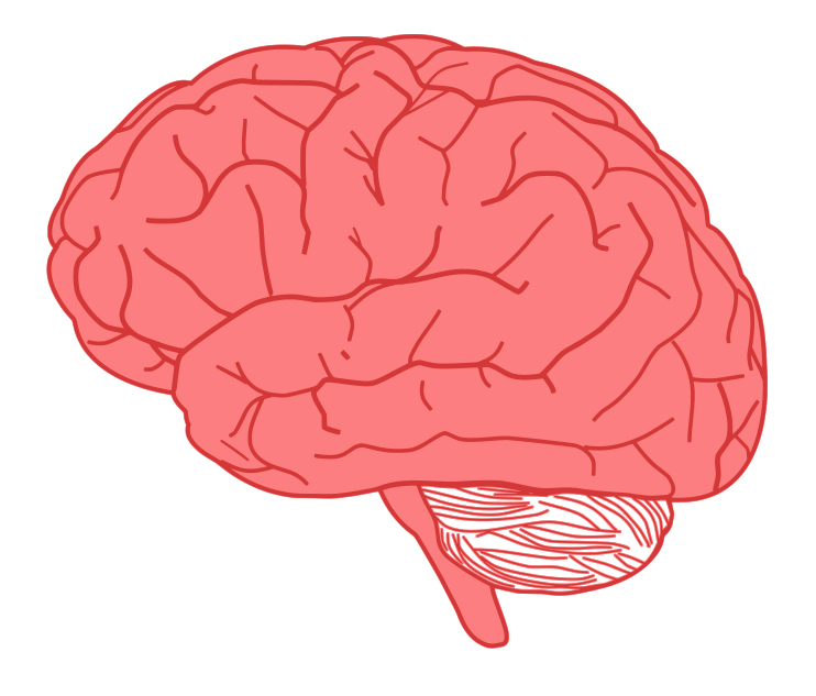 Drawn brains simple Clip Brain Use & Brain