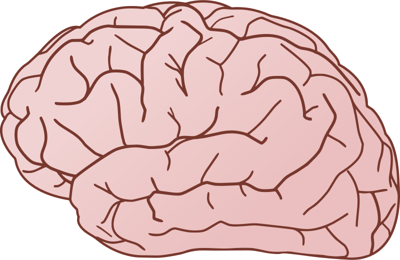 Brains clipart turn Brain Use Art Art &