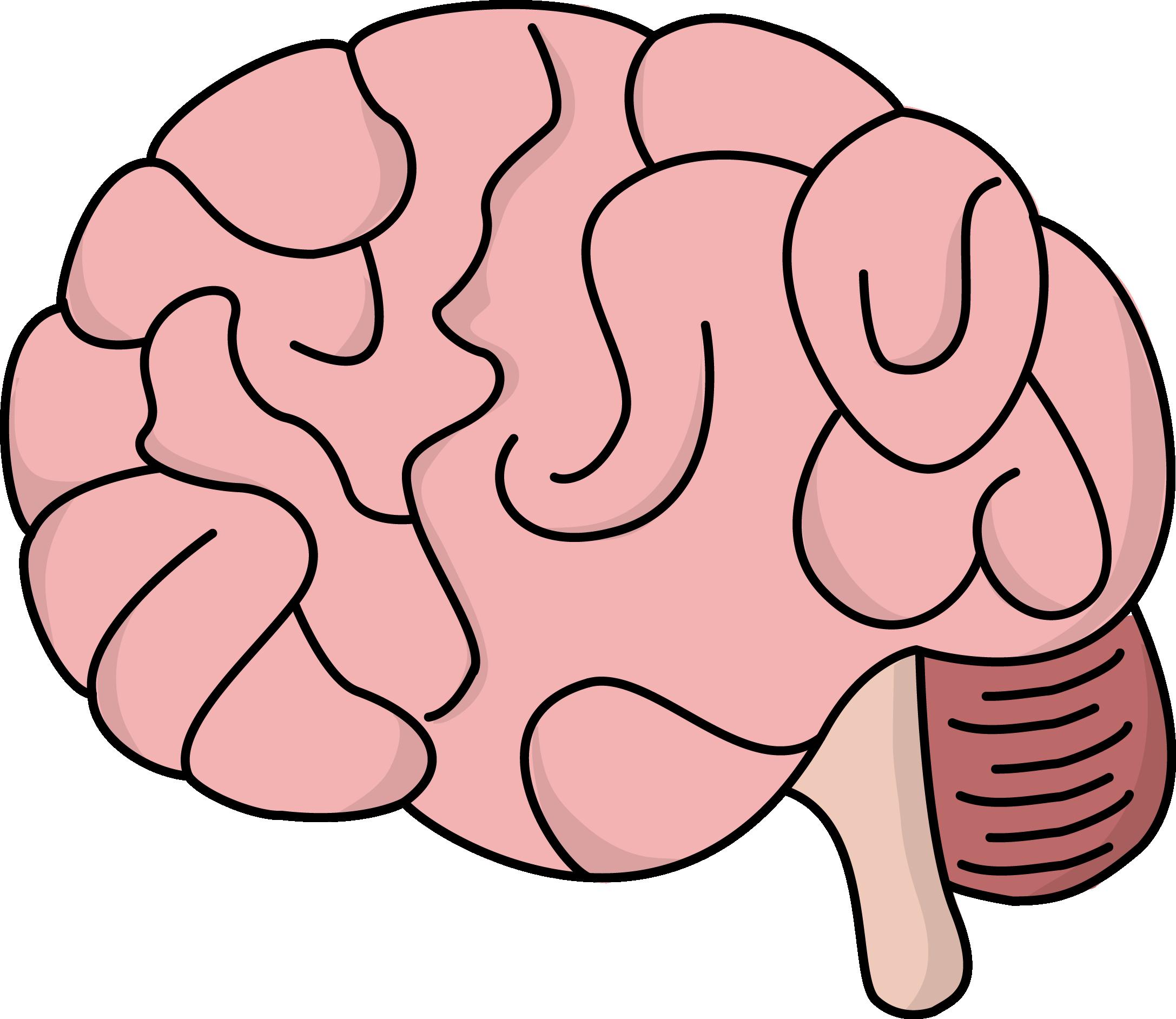 Brain clipart #733 Brain art — Clipart