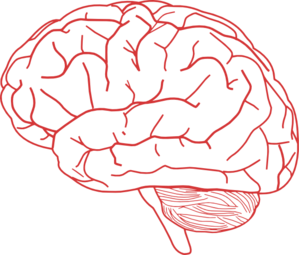 Brain clipart art png Online royalty Clip free