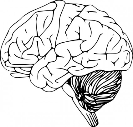 Drawn brains simple Pictures Inspiration Cliparts and Art