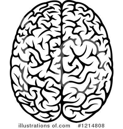 Brains clipart #13