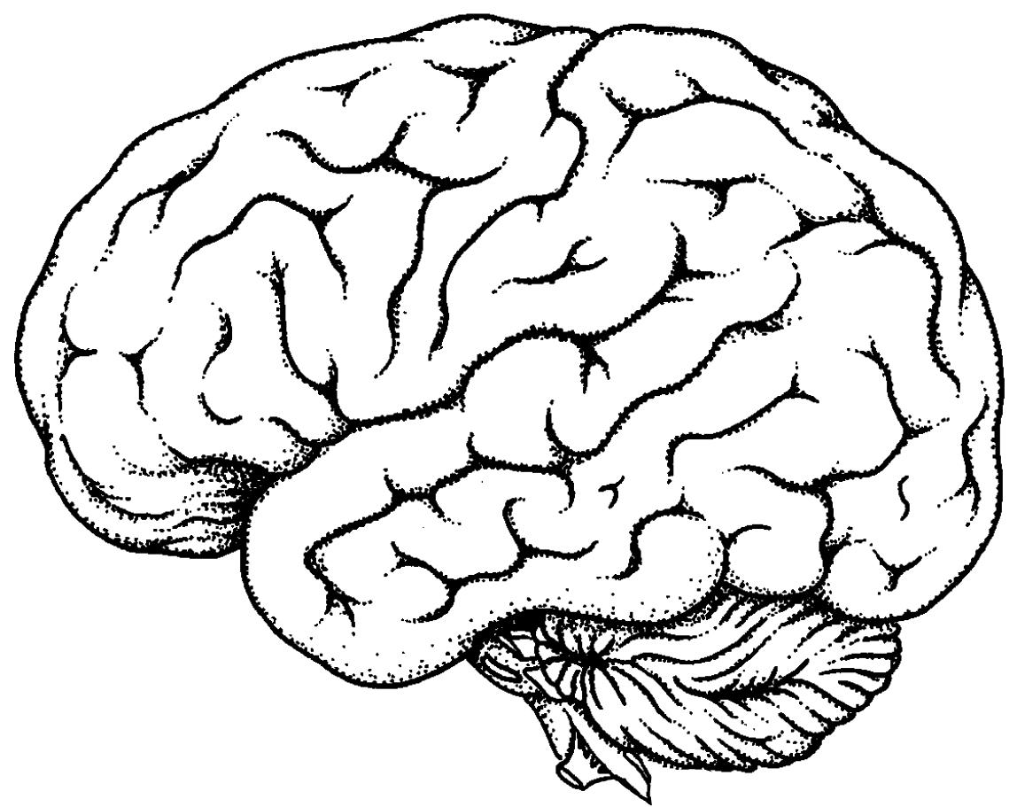 Drawn brain line drawing #14