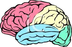 Brains clipart #14